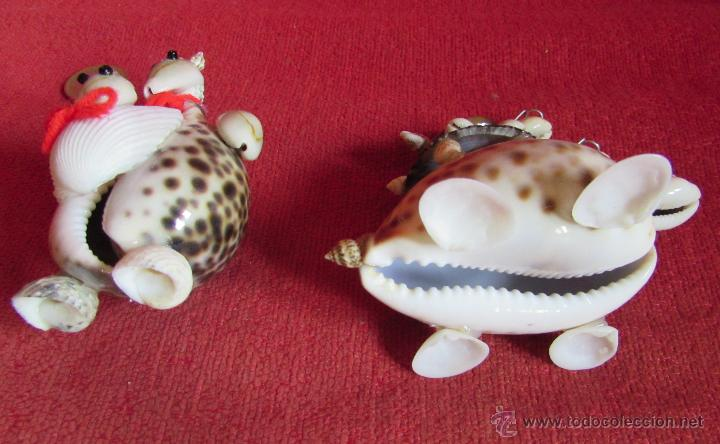 Coleccionismo de moluscos: BONITAS FIGURAS DE CONCHAS - Foto 7 - 45928529