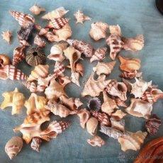 Coleccionismo de moluscos: COLECCIÓN DE CARACOLAS PEQUEÑO TAMAÑO.. Lote 47001699