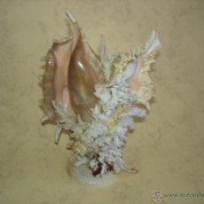 Collezionismo di molluschi: DECORATIVA COMPOSICION DE CORAL, CONCHAS Y CARACOLAS - 18 CM. DE ALTURA. Lote 48210065