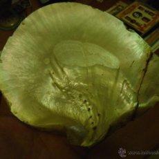 Coleccionismo de moluscos: GRAN CONCHA MARINA DE NACAR PRECIOSA - 16 X 13 APROXIMADOS 131 GRAMOS. Lote 52019521