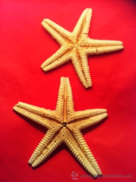 Coleccionismo de moluscos: Preciosas Estrellas de Mar naturales - Foto 2 - 54563037