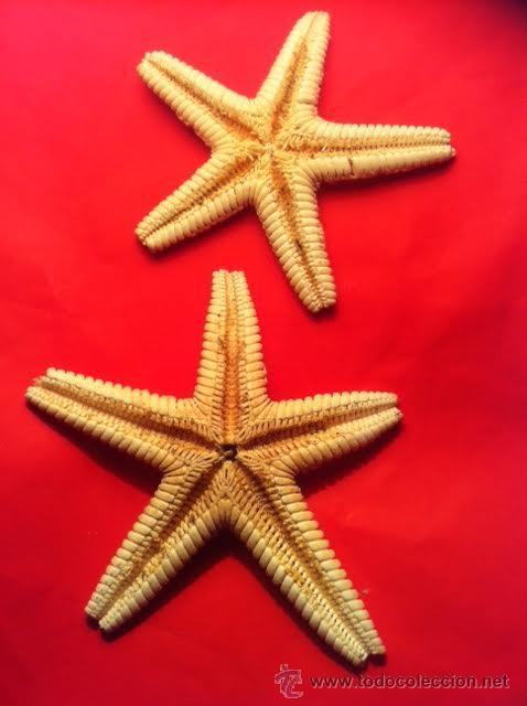 Coleccionismo de moluscos: Preciosas Estrellas de Mar naturales - Foto 4 - 54563037