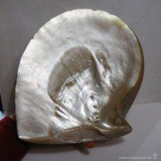 Coleccionismo de moluscos: ANTIGUA CONCHA DE NÁCAR. GRAN TAMAÑO (25 CM). Lote 56600097