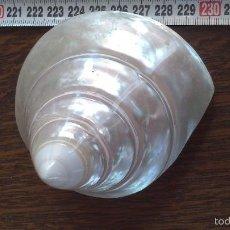 Coleccionismo de moluscos: CARACOLA DE MAR NACAR PURO. Lote 57701421