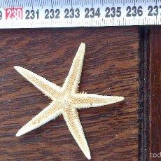 Coleccionismo de moluscos: ESTRELLA DE MAR , NO REPLICA . Lote 57702125