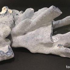 Coleccionismo de moluscos: CORAL AZUL, HELIOPORA COERULEA, 280 X 250 MM. Lote 70349642