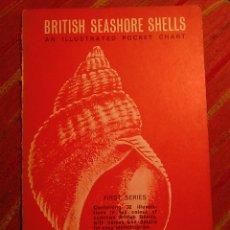 Coleccionismo de moluscos: BRITISH SEASHORE SHELLS - MALACOLOGÍA - CONCHOLOGÍA - CONCHAS MARINAS - SEASHELLS. Lote 74359318