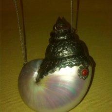 Collezionismo di molluschi: CARACOLA CONTENEDOR DECORADA. Lote 74876257