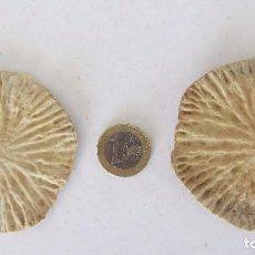 Coleccionismo de moluscos: DISCOS DE LA BERTEBRA DEL DELFIN. Lote 81491228