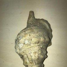 Coleccionismo de moluscos: CONCHA O CARACOL CARACOLA DE MAR GRAN DIMENSIÓN. Lote 86589060