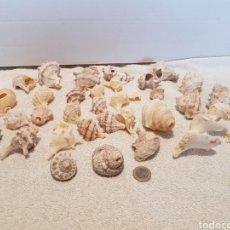 Coleccionismo de moluscos: COLECCIÓN CARACOLAS MARINAS CARACOLES MARINOS. Lote 109763530