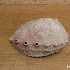 Coleccionismo de moluscos: CONCHA CARACOLA MARINA 15CM. Lote 116050203
