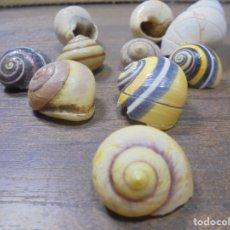 Coleccionismo de moluscos: LOTE DE POLYMITA Y CARACOLES MARINOS DE CUBA DE COLECCIONISTA PARTICULAR.. Lote 142037402