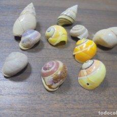 Coleccionismo de moluscos: LOTE DE POLYMITA Y CARACOLES MARINOS DE CUBA DE COLECCIONISTA PARTICULAR. VER FOTOS.. Lote 142037974