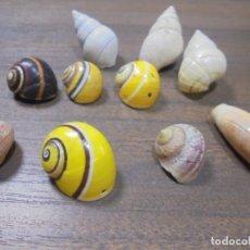 Coleccionismo de moluscos: LOTE DE POLYMITA Y CARACOLES MARINOS DE CUBA DE COLECCIONISTA PARTICULAR. VER FOTOS.. Lote 142039418
