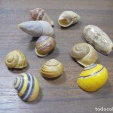Coleccionismo de moluscos: LOTE DE POLYMITA Y CARACOLES MARINOS DE CUBA DE COLECCIONISTA PARTICULAR. VER FOTOS.. Lote 142039654