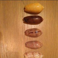 Coleccionismo de moluscos: LOTE DE 6 CARACOLAS . Lote 143333482