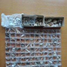 Coleccionismo de moluscos: COLECCIÓN DE MICRO MALACOLOGÍA MEDITERRÁNEA, CATALUÑA Y BALEARES AÑOS 60/70, MÁS DE 500 EJEMPLARES.. Lote 143399894