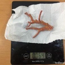 Coleccionismo de moluscos: CORAL ROJO EN BRUTO AÑOS 60 MEDITERRANEO. Lote 147707630