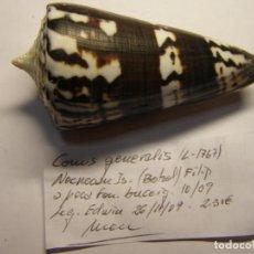Coleccionismo de moluscos: CARACOL CONUS GENERALIS, COLOR OSCURO. FILIPINAS.. Lote 148114810