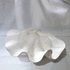 Coleccionismo de moluscos: PRECIOSA CONCHA GIGANTE.. Lote 148141008