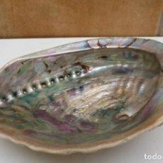 Colecionismo de moluscos: GRAN CONCHA DE NACAR OREJA DE MAR. Lote 148974078
