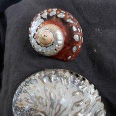 Coleccionismo de moluscos: CONCHA NACAR Y CARACOL. Lote 153536386