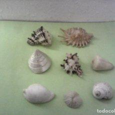 Coleccionismo de moluscos: MALACOLOGIA LOTE DE CARACOLES Y CORAL. Lote 167974676
