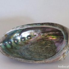 Coleccionismo de moluscos: OREJA DE MAR O LA HALIOTIS TUBERCULA. Lote 171804002