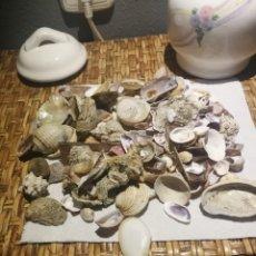 Coleccionismo de moluscos: LOTAZO DE CARACOLAS DEL MAR CON TARRO DE PORCELANA. Lote 173626989