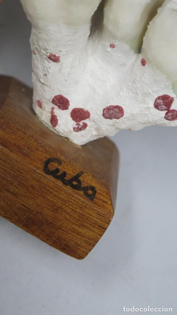 Coleccionismo de moluscos: ANTIGUO CORAL MONTADO SOBRE PEANA DE MADERA - Foto 4 - 174470422