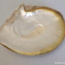 Coleccionismo de moluscos: GRAN CONCHA DE NACAR 27,5 CM. Lote 177484903