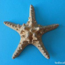 Collezionismo di molluschi: ESTRELLA DE MAR GRANDE DISECADA - IDEAL PARA CUARTOS DE BAÑO - TAXIDERMIA, EQUINODERMOS . Lote 177489044