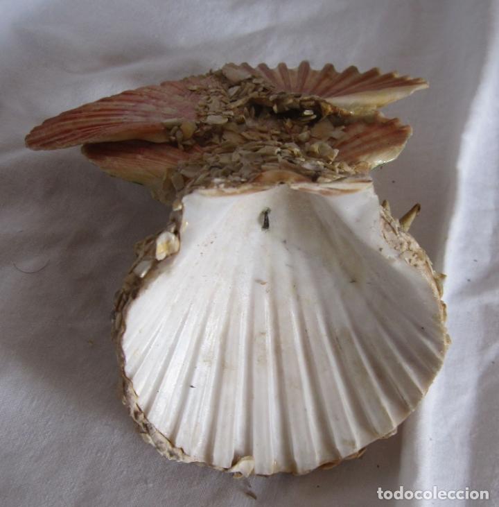 Coleccionismo de moluscos: TINTERO RECUERDO DE PALAMOS. BAÑISTA Y COMPOSICIÓN DE CONCHAS. 13 X 12 X 8 CM - Foto 4 - 178338487