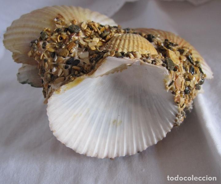 Coleccionismo de moluscos: TINTERO RECUERDO DE PALAMOS. DECORACIÓN CON BARCOS PINTADOS Y CONCHAS. 6 X 12 X 6 CM - Foto 5 - 178339223