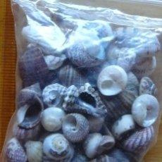 Coleccionismo de moluscos: 75 GRAMOS DE CONCHAS PEQUEÑAS DE LAS RIAS BAIXAS SIMILARES A LAS FOTOS. Lote 182402661