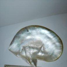 Coleccionismo de moluscos: CONCHA DE NÁCAR. Lote 190605093