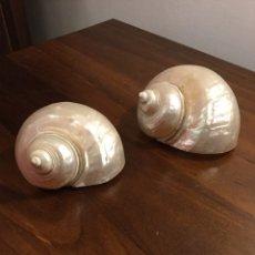 Coleccionismo de moluscos: DOS CARACOLAS DE NÁCAR. Lote 192077898