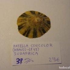 Coleccionismo de moluscos: CARACOL SNAIL SHELL PATELLA CONCOLOR. SUDÁFRICA. . Lote 192257543