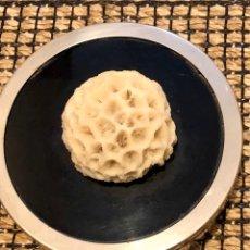 Coleccionismo de moluscos: CAJA CON CORAL PÉTREO , O DE CEREBRO. Lote 194768678