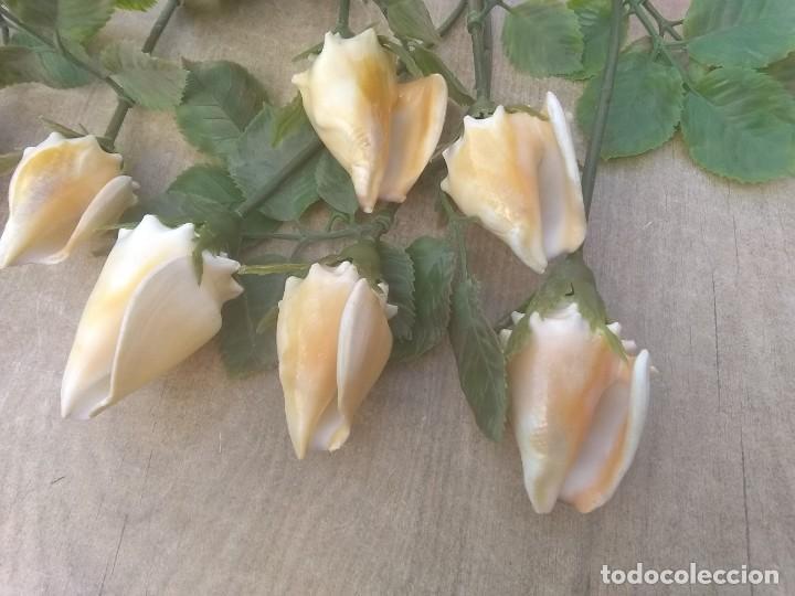 Coleccionismo de moluscos: Ramo de rosas de caracolas marinas - Foto 2 - 195464026