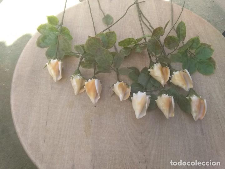 Coleccionismo de moluscos: Ramo de rosas de caracolas marinas - Foto 3 - 195464026