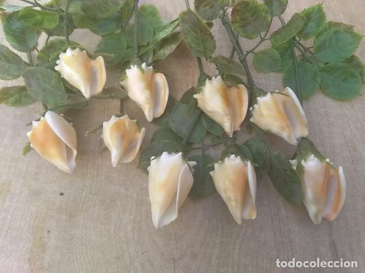 Coleccionismo de moluscos: Ramo de rosas de caracolas marinas - Foto 6 - 195464026