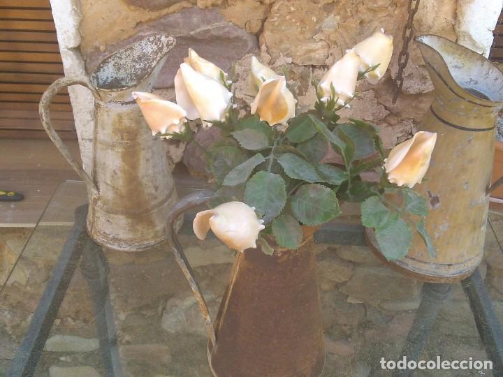 Coleccionismo de moluscos: Ramo de rosas de caracolas marinas - Foto 9 - 195464026