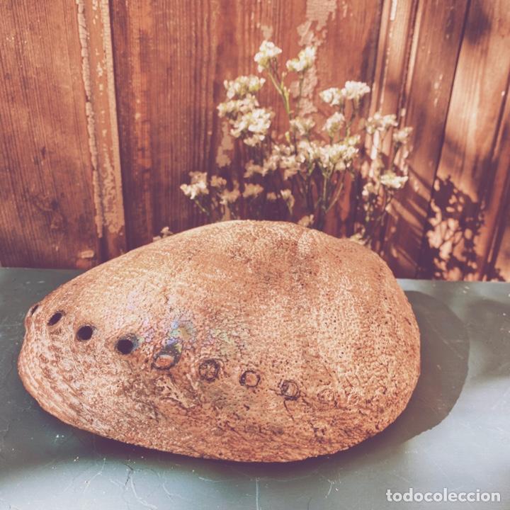 Coleccionismo de moluscos: Preciosa Gran Concha De Colores Intensos ANTIQUE UNIQUE - Foto 4 - 191096781