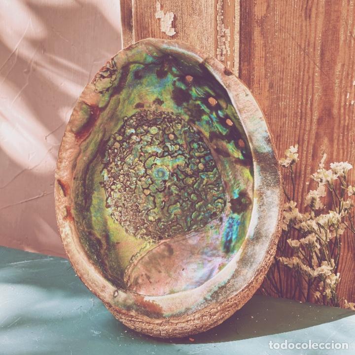 Coleccionismo de moluscos: Preciosa Gran Concha De Colores Intensos ANTIQUE UNIQUE - Foto 5 - 191096781