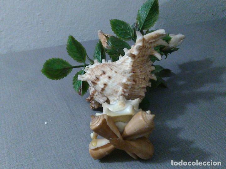 Coleccionismo de moluscos: Preciosa composición vintage de conchas marinas diversas. - Foto 2 - 197632150