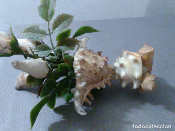 Coleccionismo de moluscos: Preciosa composición vintage de conchas marinas diversas. - Foto 3 - 197632150