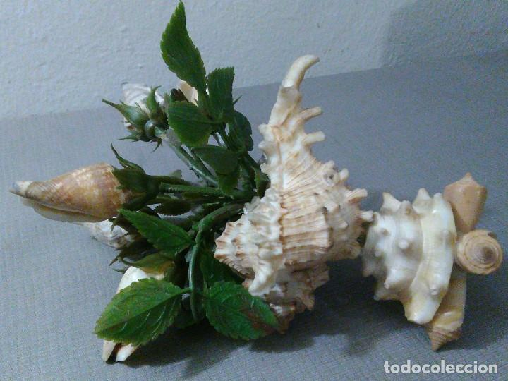 Coleccionismo de moluscos: Preciosa composición vintage de conchas marinas diversas. - Foto 4 - 197632150