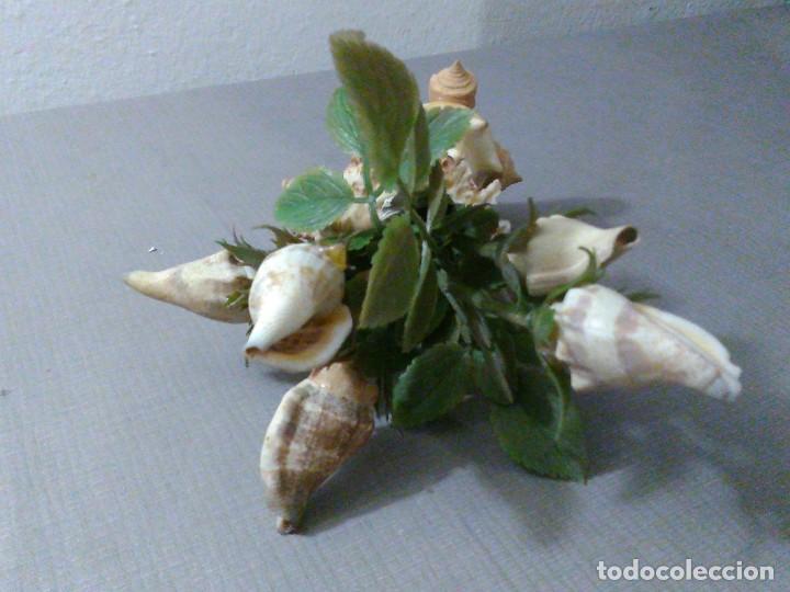Coleccionismo de moluscos: Preciosa composición vintage de conchas marinas diversas. - Foto 9 - 197632150